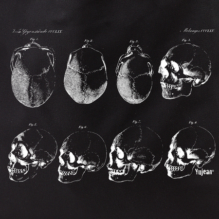 Skull Study Tote | Cabinet of Curiosities