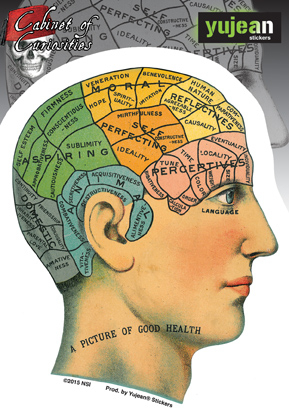 Cabinet of Curiosities Phrenology Sticker | Cabinet of Curiosities
