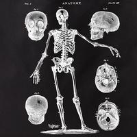 Skeleton With 5 skulls Tote