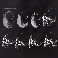 Skull Study Tote