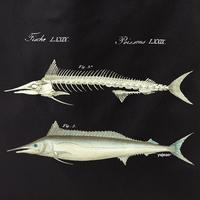 Curiosities Fish Skeleton Tote