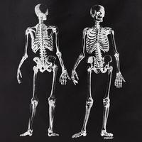 Curiosities Skeleton Duo Tote
