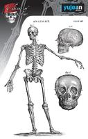 Cabinet of Curiosities Skeleton Sticker