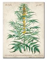 Cannabis Metal Sign