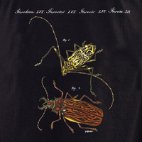 Curiosities Bugs Shirt