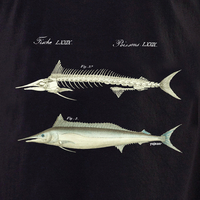 Curiosities Fish Skeleton Shirt